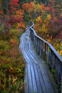 "Bridget Martin's color photograph, ""Pathway,"" was awarded Silver Key in the Globe Show."