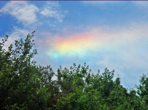 Rainbowby Sami Murray