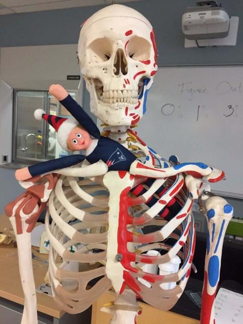 elf-on-a-skeleton